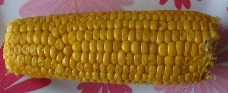 Is Corn Bad for You?