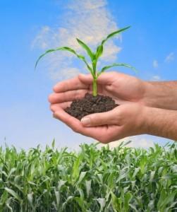 Growing Tree_ThePlantBasedDiet.com