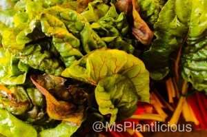 Kale on ThePlantBasedDiet.com